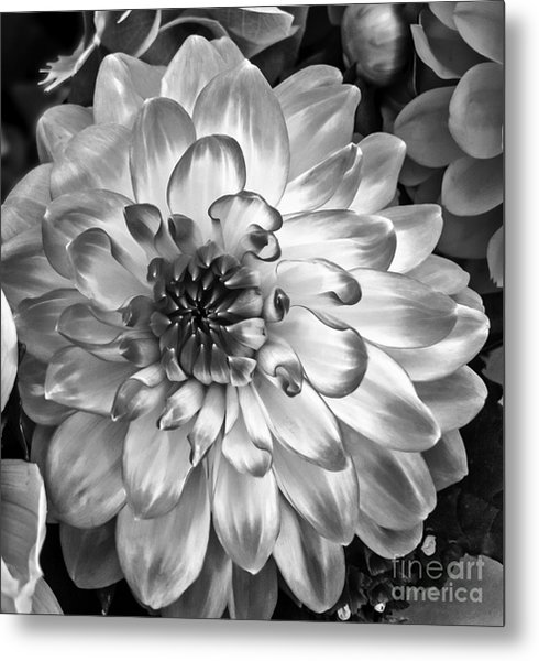 Simply Beautiful Metal Print