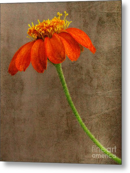 Simply Orange Metal Print