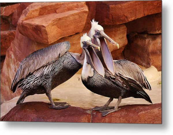 Singing In Perfect Harmony Metal Print by Paulette Thomas