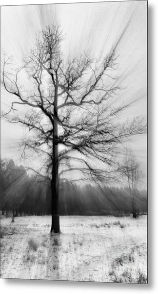 Single Leafless Tree In Winter Forest Metal Print