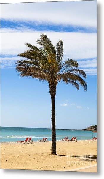 Single Palm Tree On Beach With Unoccupied Sun Loungers Metal Print