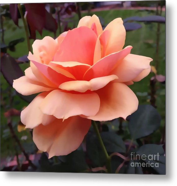 Single Rose Metal Print