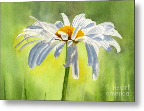 Single White Daisy Blossom Metal Print