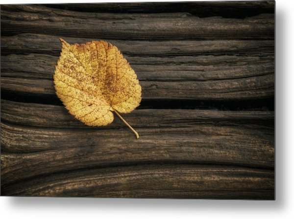 Single Yellow Birch Leaf Metal Print