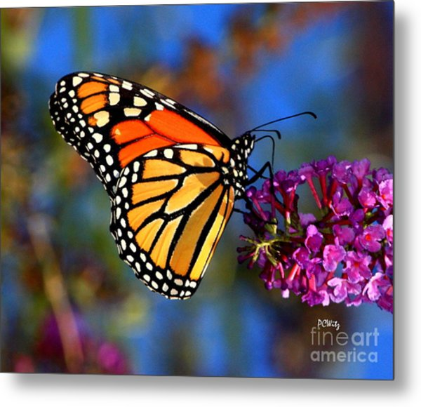 Sipping Monarch Metal Print