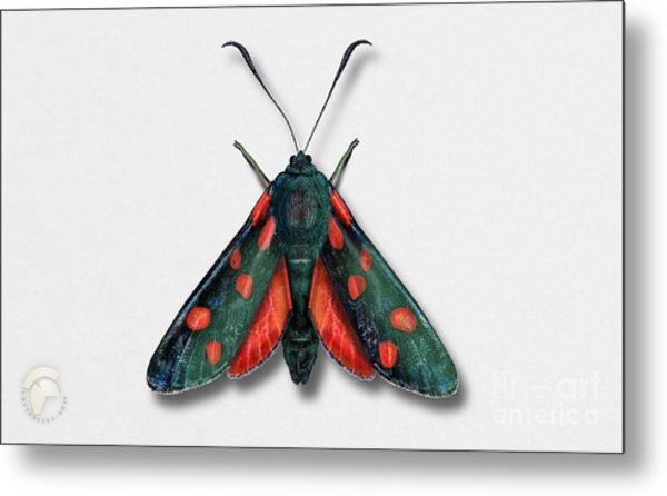 Six Spot Burnet Butterfly - Zygaena Filipendulae Naturalistic Painting - Nettersheim Eifel Metal Print