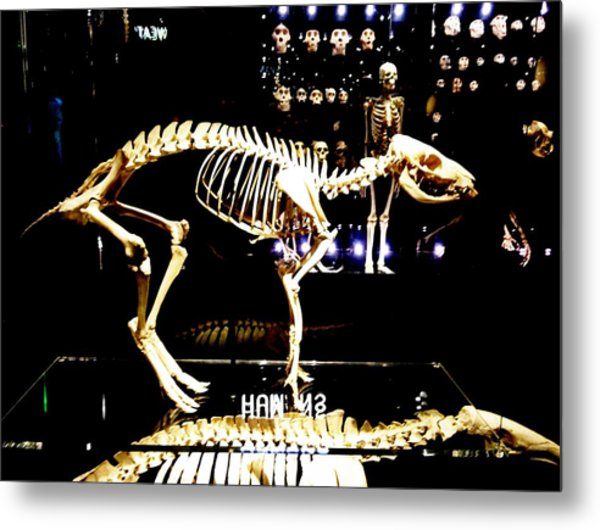 Skeleton 340 Metal Print