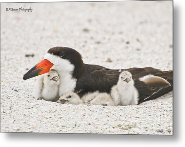Skimmer Family Cuddle Metal Print