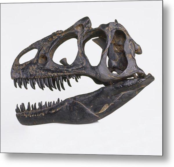 Skull Of Allosaurus Metal Print by Dorling Kindersley/uig