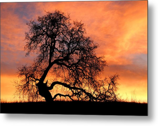 Metal Print featuring the photograph Sky On Fire by Priya Ghose