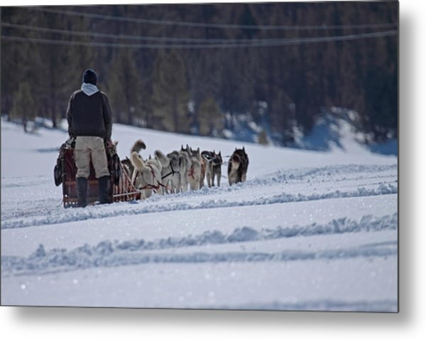 Sled Dog  Metal Print