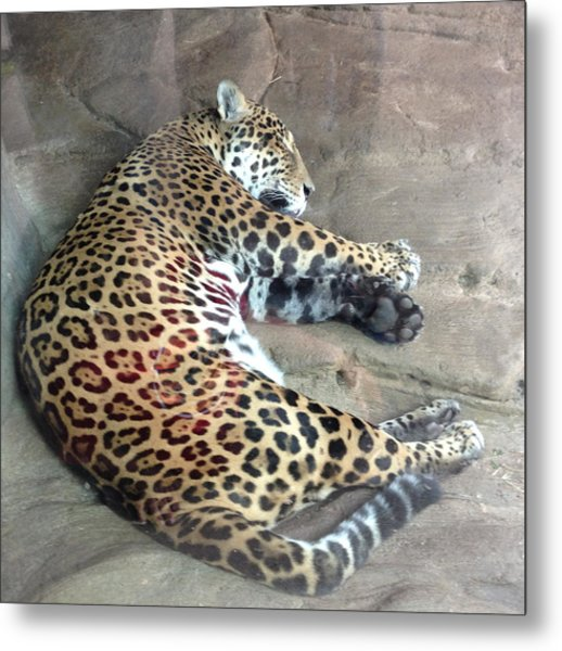 Sleep Time Jaguar Metal Print by Gary Govett