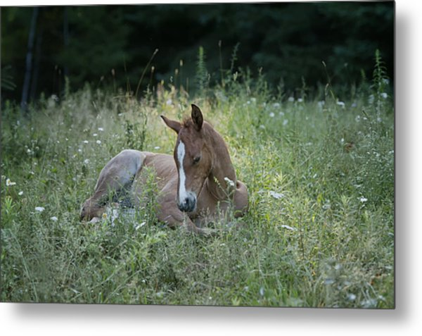 Sleeping Baby Metal Print by Peter Lindsay