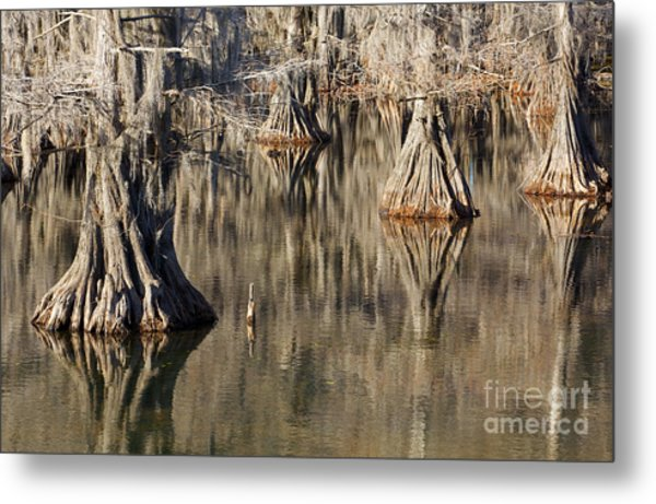 Sleeping Cypress Metal Print