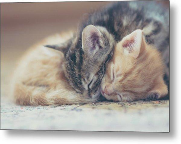Sleeping Kittens Metal Print by Harpazo hope