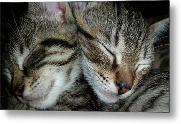 Sleeping Kittens Metal Print
