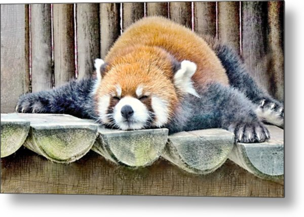 Sleeping Red Panda Bear Metal Print