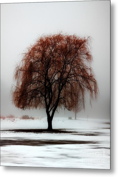 Sleeping Willow Metal Print