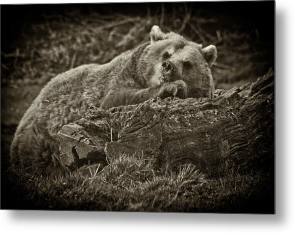 Sleepy Bear Metal Print