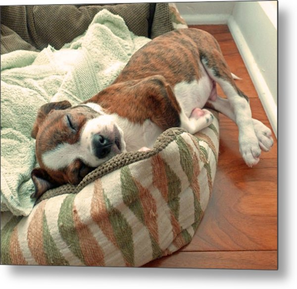 Sleepy Puppy Metal Print