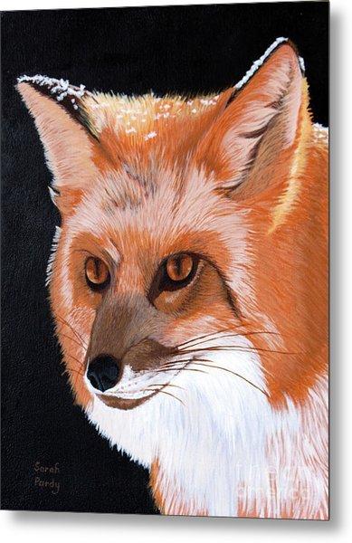 Sly Red Fox Metal Print