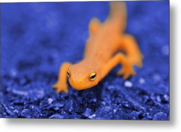Sly Salamander Metal Print