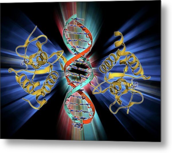 Smad4 Protein Domain Bound To Dna Metal Print by Laguna Design
