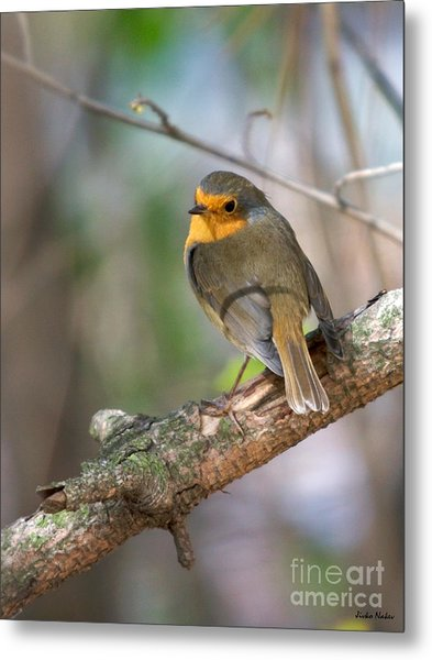 Small Bird Robin Metal Print