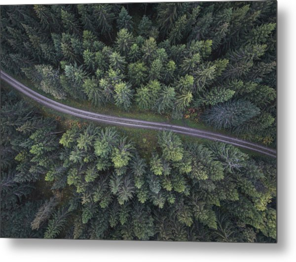 Small Road Through The Forest Metal Print