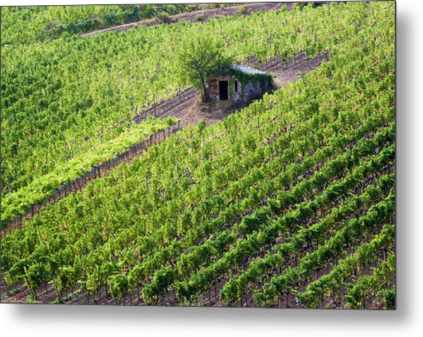 Small Rock Shed In The Vineyards Metal Print