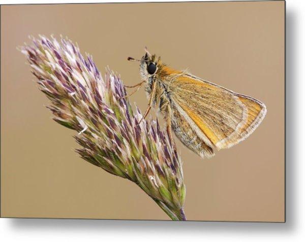 Small Skipper Butterfly Metal Print