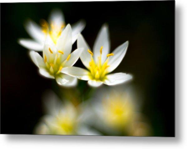 Small White Flowers Metal Print