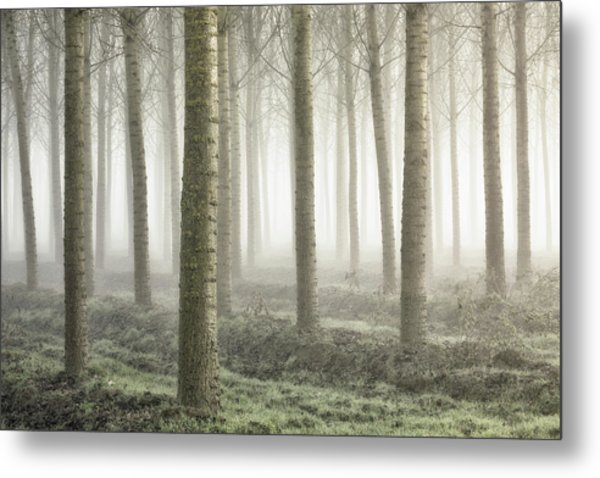 Small Woodland Metal Print