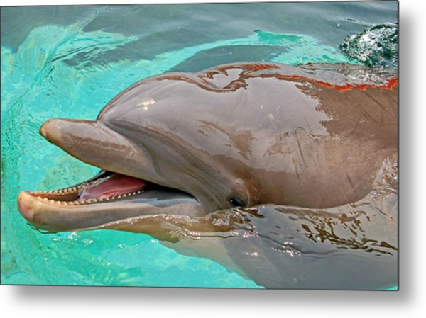 Metal Print featuring the photograph Smiling At You by Donna Proctor