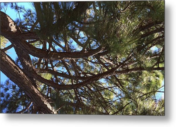 Smiling Branches Metal Print