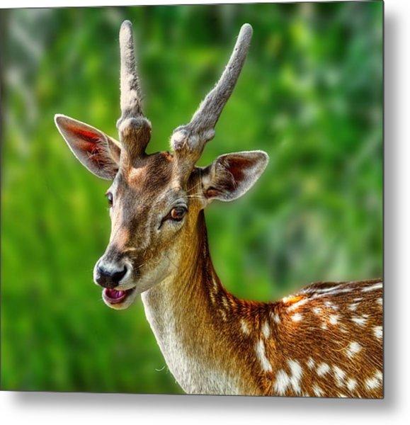 Smiling Deer Metal Print