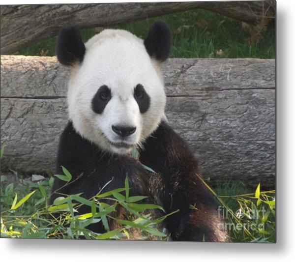 Smiling Giant Panda Metal Print