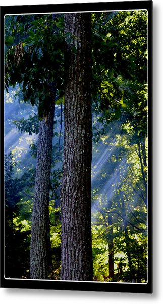 Smoke Through The Trees Metal Print