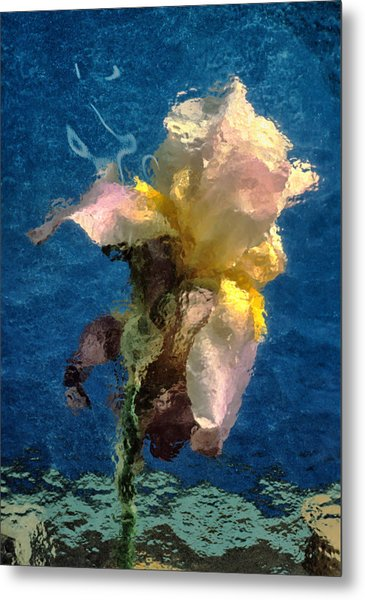 Smoking Iris Metal Print