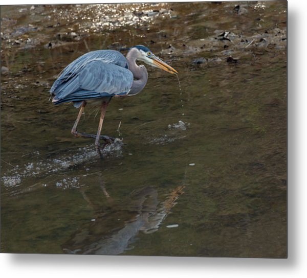 Snack Break Metal Print