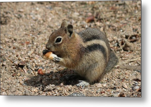 Snack Time Metal Print