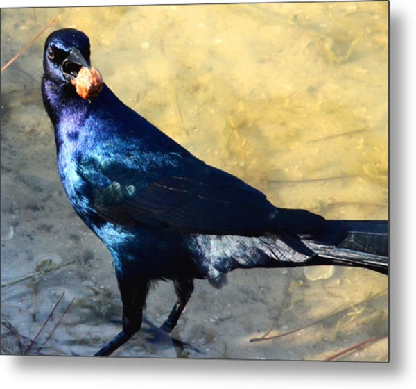Snack Time Metal Print by Julie Cameron