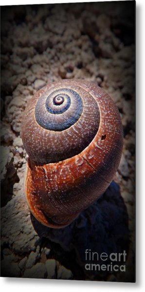 Snail Beauty Metal Print