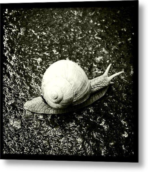 Snail Black And White Metal Print