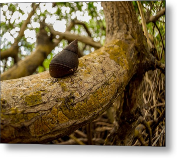 Snail Metal Print by Carl Engman