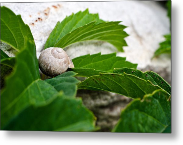 Snail Shell Metal Print by Chase Taylor