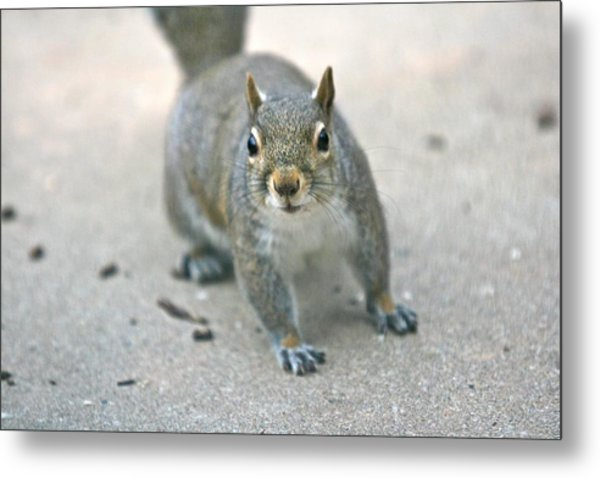 Sneak Metal Print by Debbie Sikes