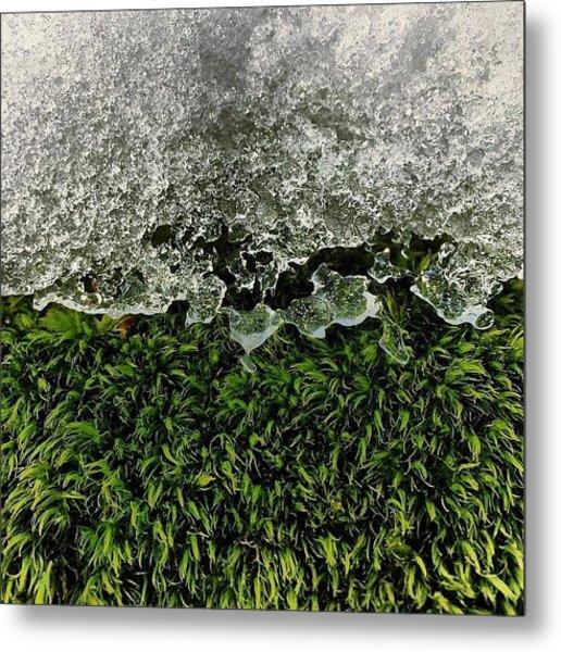 Snow & Moss, 2015.02.07 #bmr #lehman Metal Print