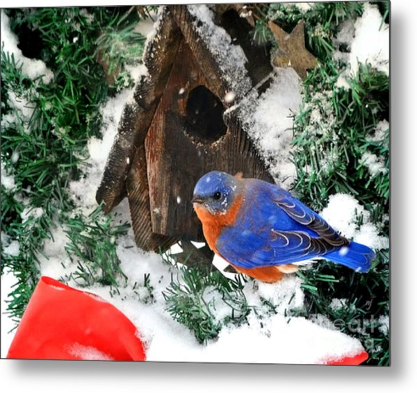 Snow Bluebird Christmas Card Metal Print