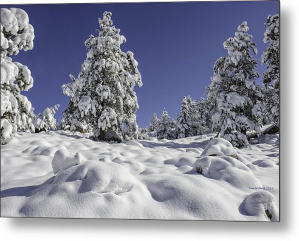 Snow Bomb Metal Print by Tom Wilbert